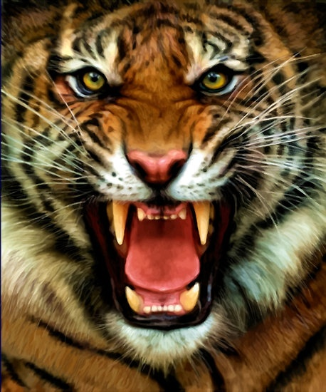 Digital painting . I started by looking at the best tiger growling faces I could find . Then took the aspects of them that I liked . This still needs work.There are several flaws to work out .