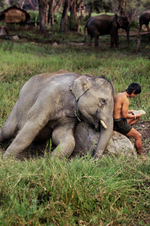 Elephant Bedtime story...By Steve McCurry <3