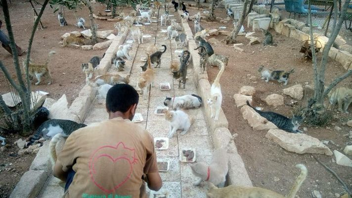 "Man Risks His Life To Save Cats In War-Torn Syria | Petcha | ""When the 'Cat Man of Aleppo,' Mohammad Alaa Aljaleel, is not saving people, he is saving cats."" Click to read and share this short article with video (2:04)."