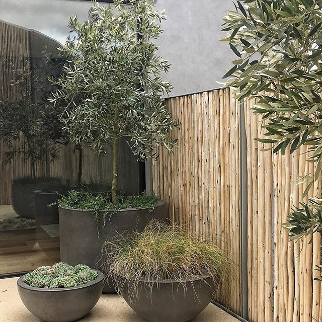If you are after a tree for a pot, you can't beat Olive trees. Make sure this pot is a generous size like the one in this recently completed project #advancedtrees #arbornet #olivetrees #courtyard #oleaeuropaea