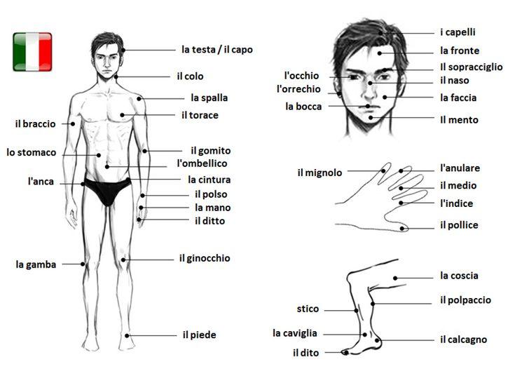 Le Parti del Corpo