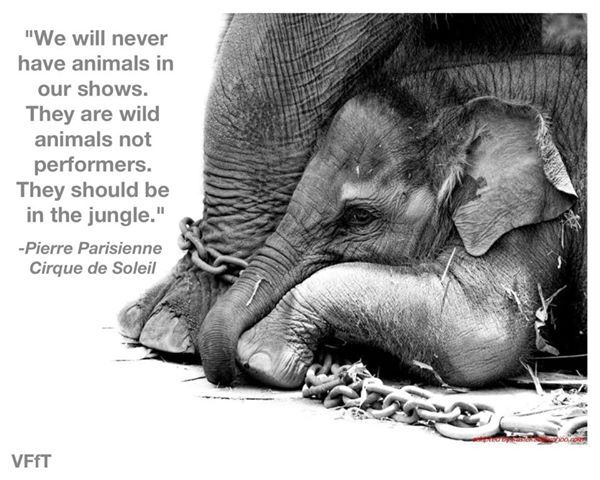 Animal Cruelty...don't Put Up With It...don't Support It