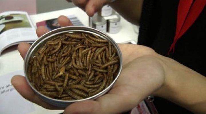 """Vermi arrosto fatti in casa, ecco la fattoria da """"microfood"""""""