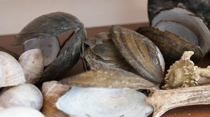 Faktkul Design, natural decoration shells,