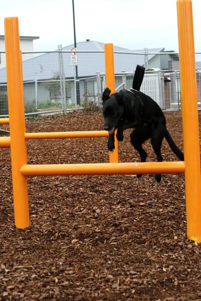 Dog Boarding Cedar Park