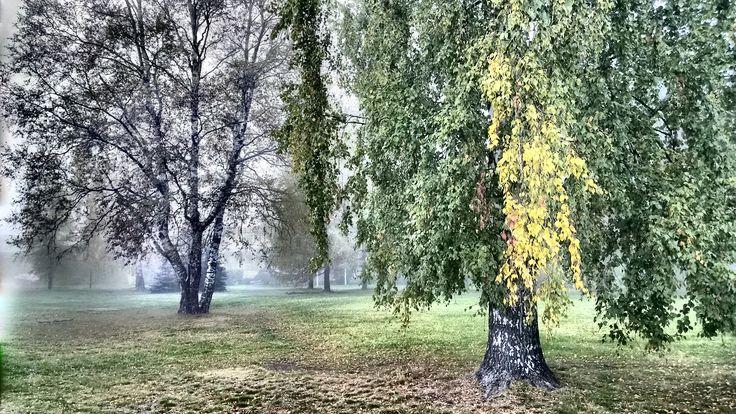 Misty Park. HDR image, Lumia 1020 photo by Auvo Veteläinen.