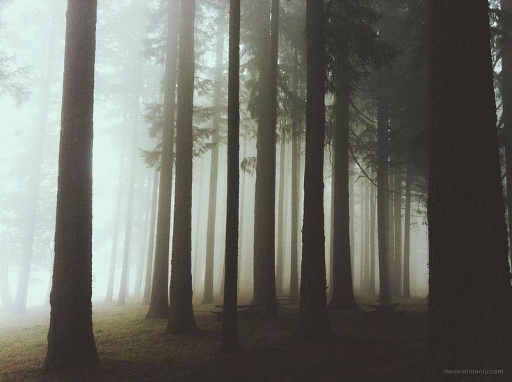 Fog in Bald Peak, Oregon [2592x1936] iPhone 5 Picture