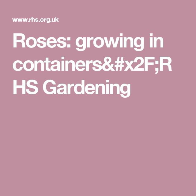 Roses: growing in containers/RHS Gardening