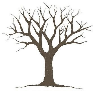 Trees Seasons And Four Seasons On Pinterest