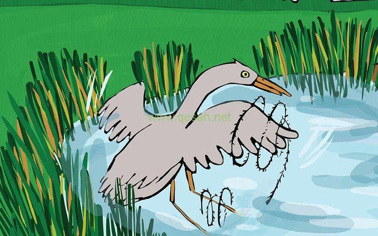 قصه عن الرفق بالحيوان مصورة قصة كريم ونورين قصة واقعية Animals Badge Rooster