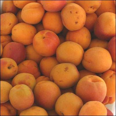 Apricot Allergy Symptoms and Diagnosis  Here's how fruits can be causing sensitive issues in the individuals and messing up the life  Apricots are very nutritious yet ready for activating medical problems among the individuals who are profoundly sensitive to the fruit.  http://allergy-symptoms.org/apricot-allergy/
