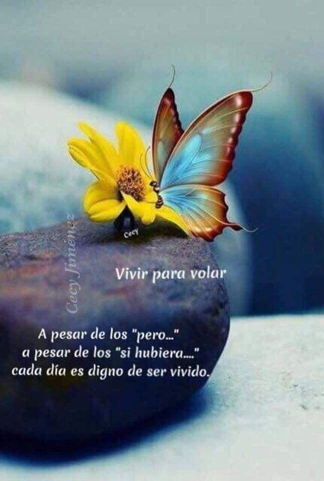 Vivir Incluso En Lunes Mariposas Frases Y Buenos Días