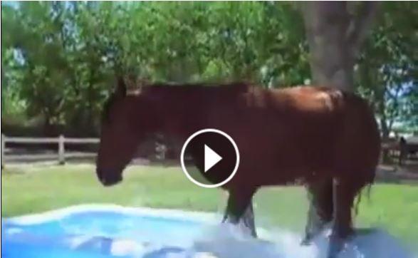 VIDEO: Il cavallo e la piscinetta… Troppo carino