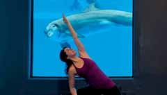 Downward-facing dog—or dolphin? Add another dimension to your yoga experience as you let the serenity of Mirage's Dolphin Habitat wash over you. The underwater workout location features multiple windows, providing an intimate opportunity to view the resort's family of bottlenose dolphins while flowing from pose to pose.   #yoga #dolphin #lasvegas #Where