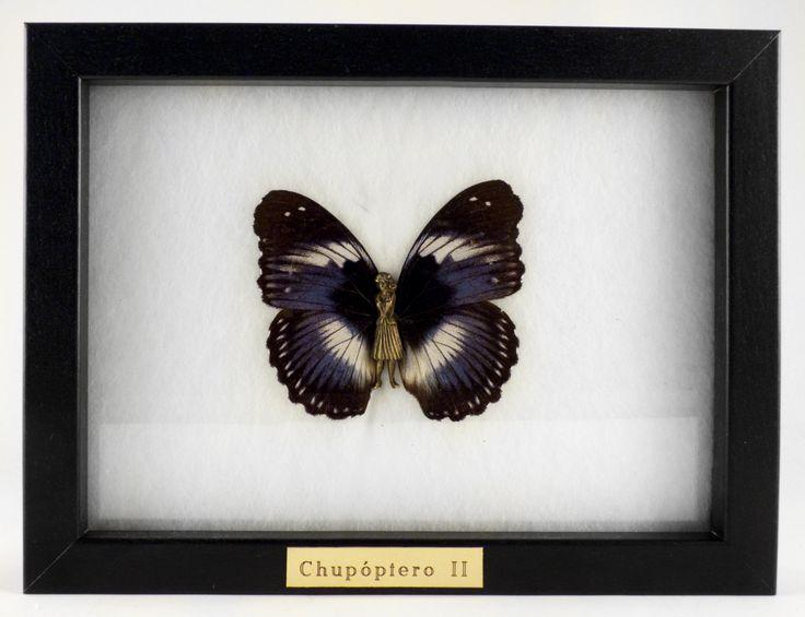 """Chupóptero II"" Bronce y mariposa real (13x18m) Laura Salguero"