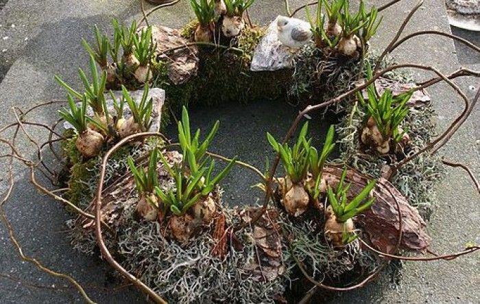 Haal het voorjaar naar je toe met deze krans met blauwe druifjes. Nodig: mos (tuin), strokrans, kronkeltakken, blauwe druifjes, krammen, binddraad, koperkleurig binddraad, (tuincentrum), zakjes decoratiemos met schors (Action), vogeltje (Action). Omwikkel de strokrans met mos (uit de tuin!) en zet dit vast met binddraad/krammen. Duw de strokrans een beetje uit elkaar en plaats de bolletjes in de krans. Versier de krans met decoratiemos, schors, kronkeltakken en het vogeltje. Omwikkel ...