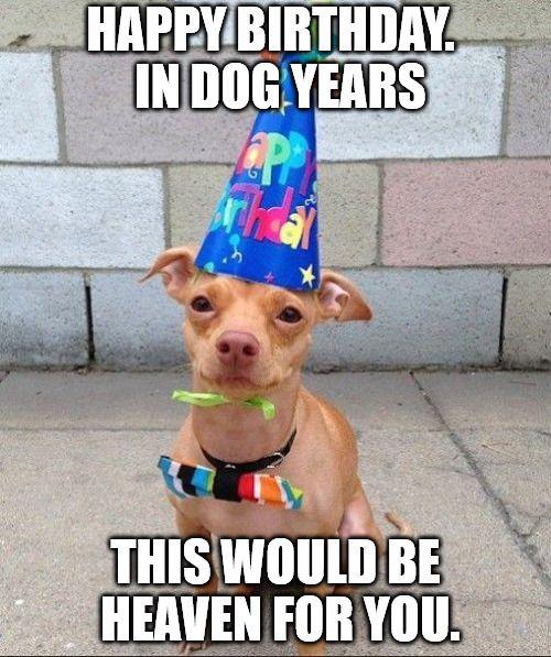 130 Best Happy Birthday Memes Images On Pinterest