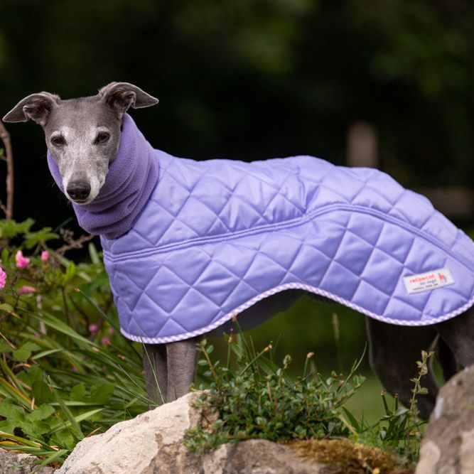Best Greyhound Coats | Coats For Greyhounds Chelsea Dogs Blog