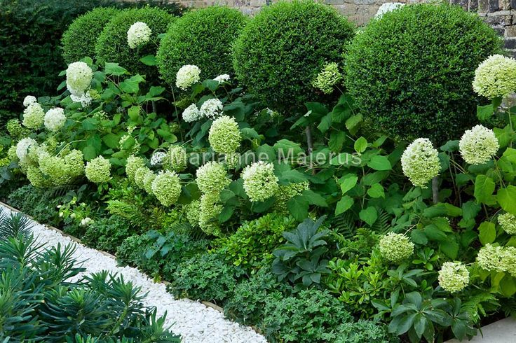 Family garden in Putney | Charlotte Rowe Garden Design
