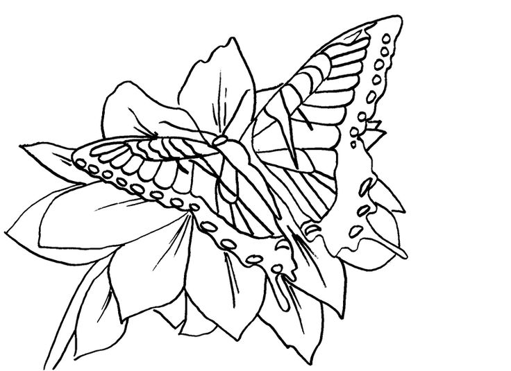 Tiger Coloring Pages Free Cute Az Large Selection Of Butterfly