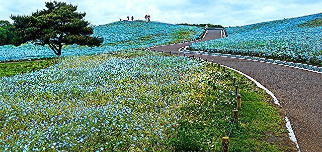 Taman Bunga Ros Tercantik Di Dunia