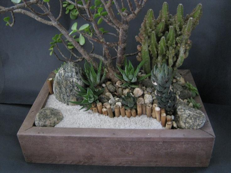 Claudio Lourenço Paisagismo: Mini-Jardins de Suculentas em Vidro e em cachepô de madeira.