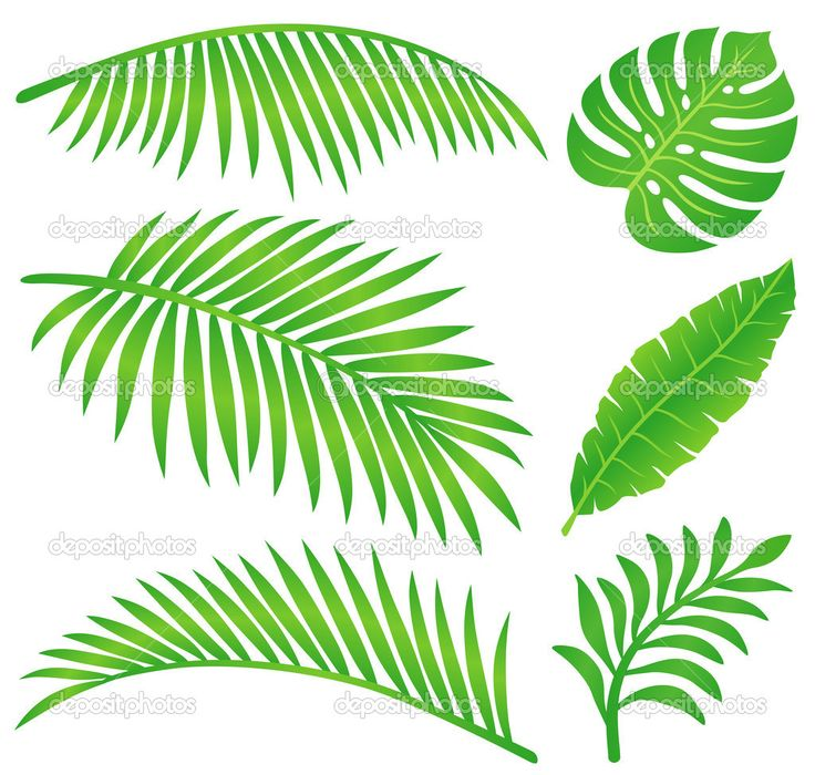 Картинки листьев пальмы
