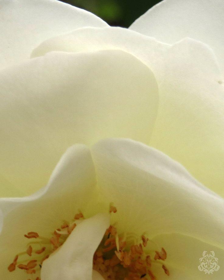 #写真 #花 #flower #ファインダー越しの私の世界 (1) Akiko Nishijima(@AkikoNisijima)さん   Twitterの画像/動画