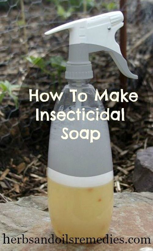 insecticidal soap insecticide pests acultivatednest remedies aphid doesn pesticides