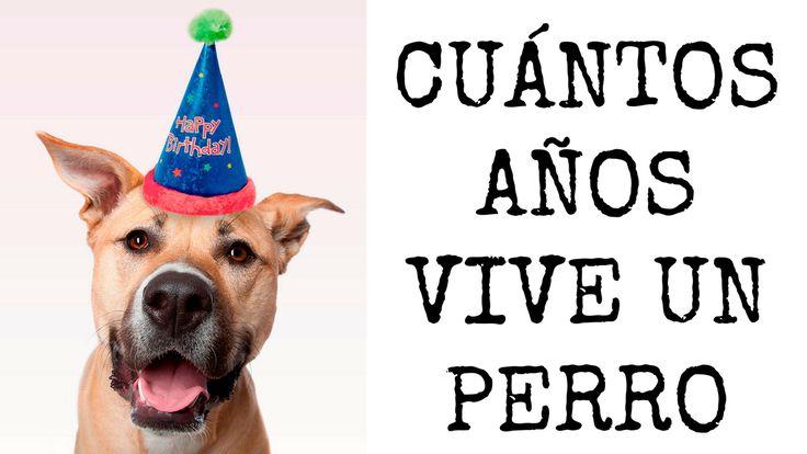 Cuántos años vive un #perro