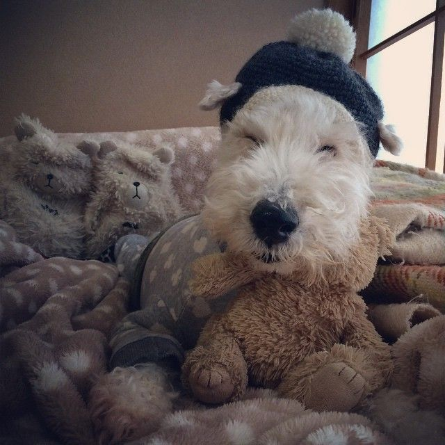 In love with Borotan, this 15 year old wire fox terrier. In LOVE.