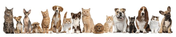LIMITED OPENINGS for this short term pet community. (set to last about 2 months) Join the Furry Club Community and earn rewards. They are looking for pet owners who buy pet food online on occasion. http://www.freebiequeen13.net/furry-club-community.html