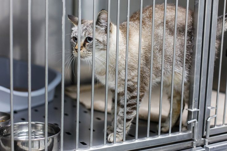 Cat Boarding – A Best Solution to Ensure Your Pet's Safety.. #CatBoarding #Cattery