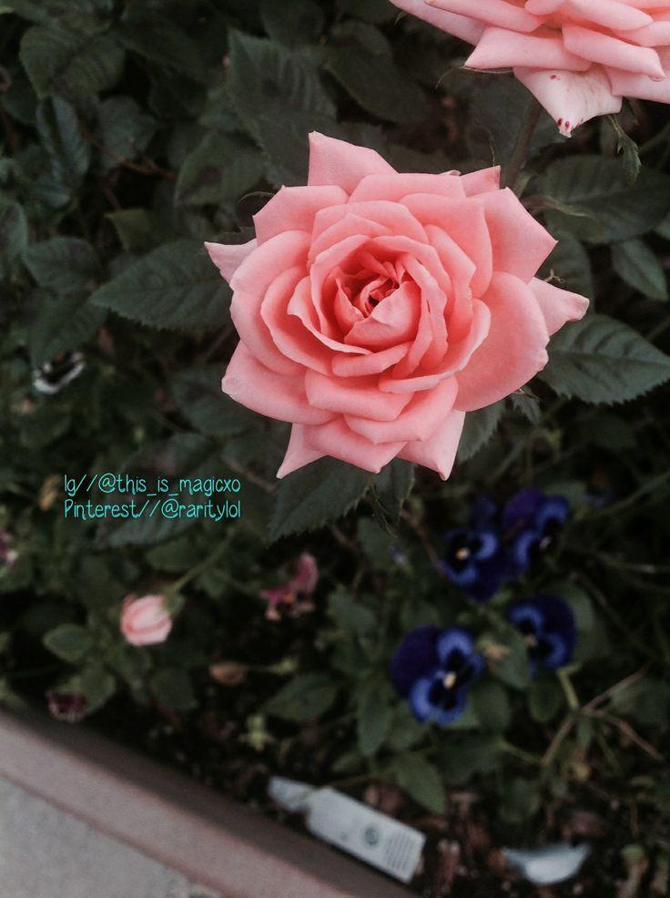 Flower!Pics, Flower