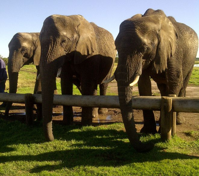 Elephant Sanctuary at Plettenberg Bay. I AM MOST EXCITED FOR THIS