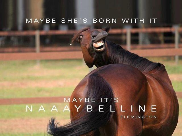 Dating a horse girl meme