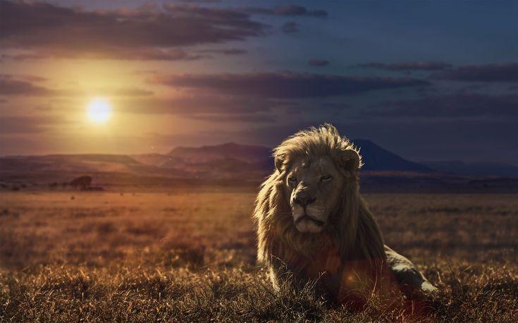 King of the Serengeti http://africatriedandtested.com/