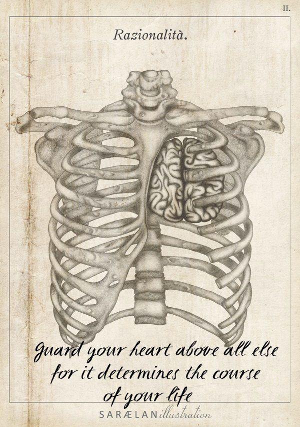 45 best brain anatomy images on Pinterest | Skulls, Random things ...