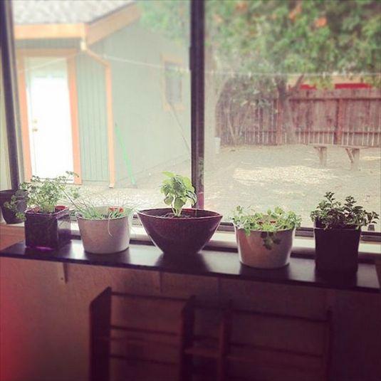 Window herb garden with thrift store pots, IKEA shelves ($8)
