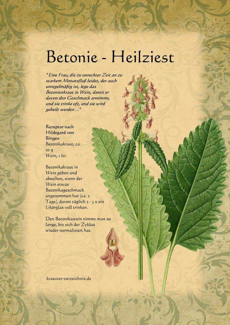 966 besten heilkr uter pflanzen healing herbs bilder auf pinterest brainstorm einfach und. Black Bedroom Furniture Sets. Home Design Ideas
