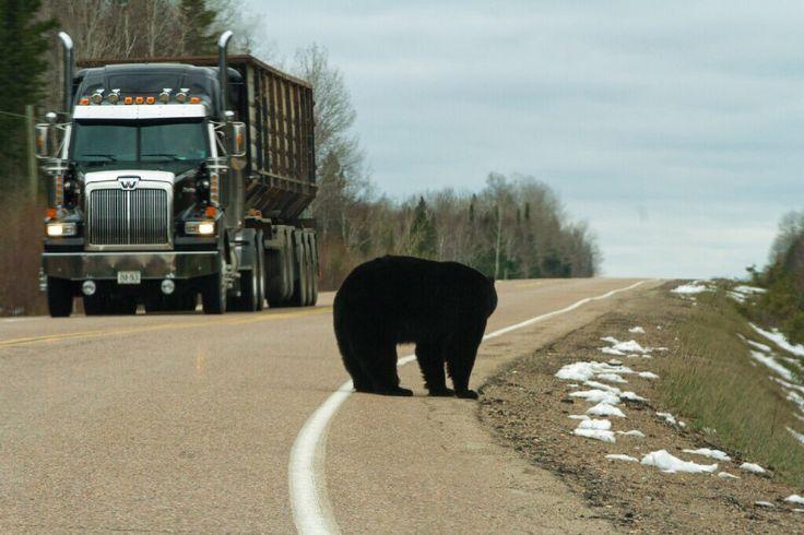 Black Bear Hwy 129