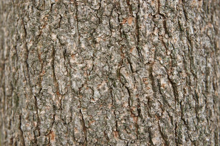 Two great elm tree bark textures - http://www.myfreetextures.com/two-great-elm-tree-bark-textures/