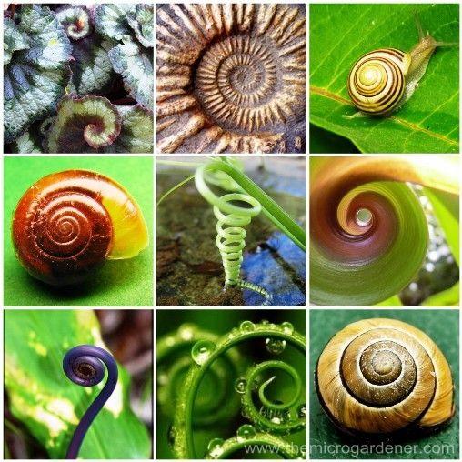 Spiral patterns found in nature | The Micro Gardener