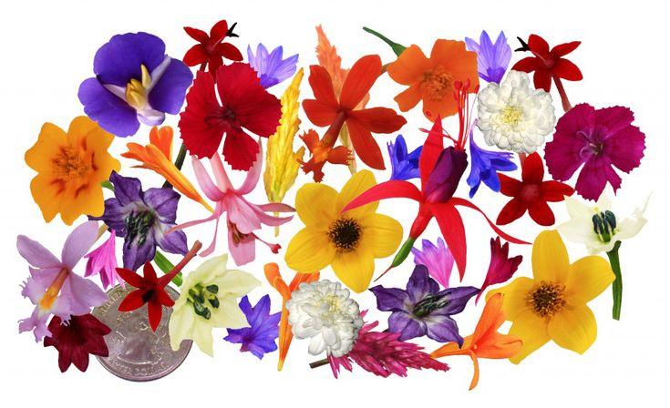 Edible Flowers, FireStix, Sparklers™, MicroFlower Blend   FreshOrigins