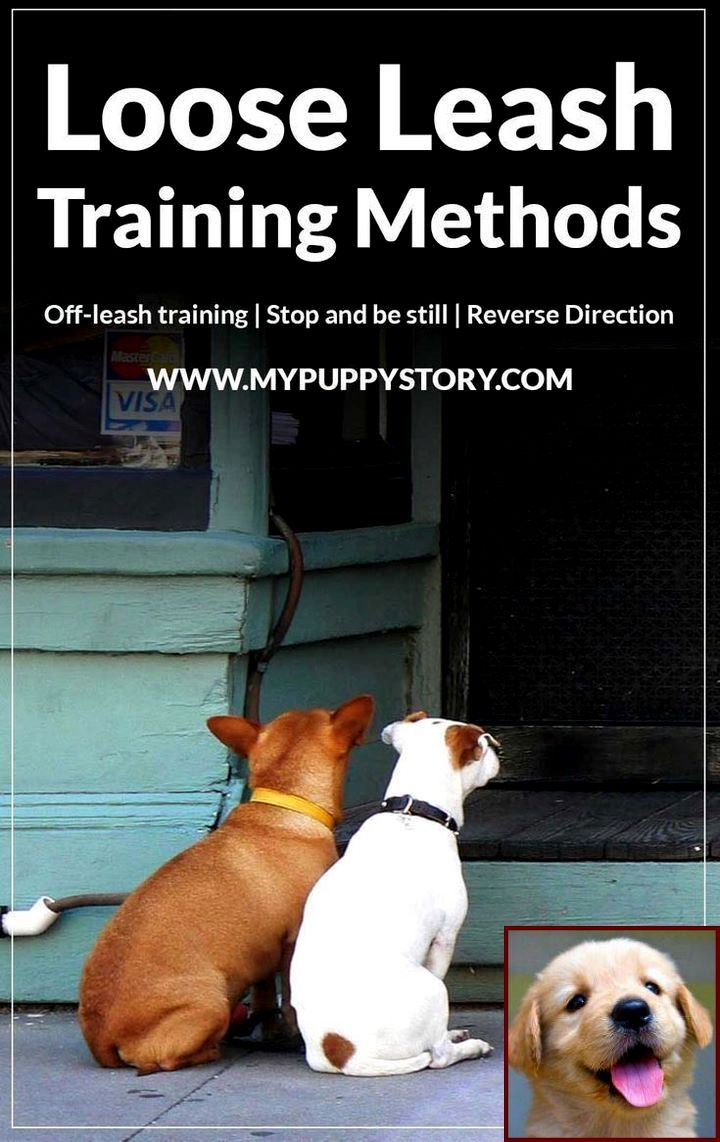 House Training Puppy Not Going Well And A Dog Behavioral Therapist