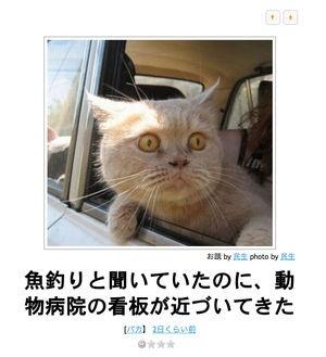 【可愛い!】ネコだけをまとめたボケて傑作選【ハイレベル】13/01/15 更新! - NAVER まとめ