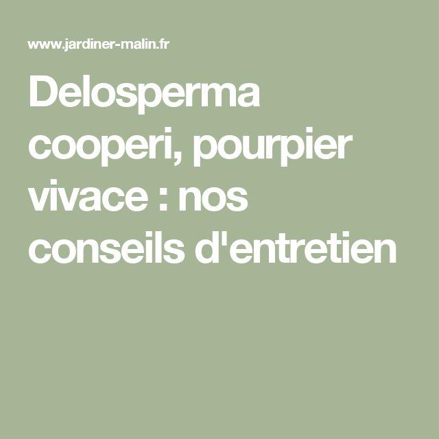 Delosperma cooperi, pourpier vivace : nos conseils d'entretien