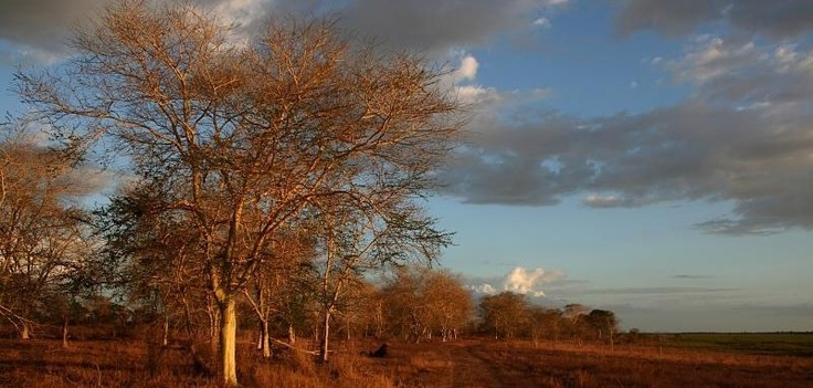 A typical savannah landscape taken on track #4 in Gorongosa National Park, one the most traveled on by the Gorongosa Lions!http://on.fb.me/VktaXE
