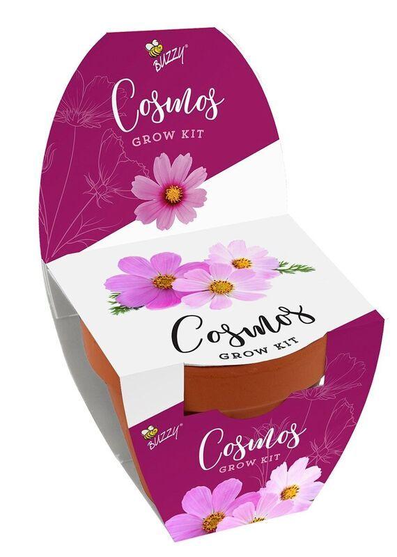 Classic Terra Cotta Grow Kit Strawberry Buzzyseeds Com Grow Kit Kit Terracotta