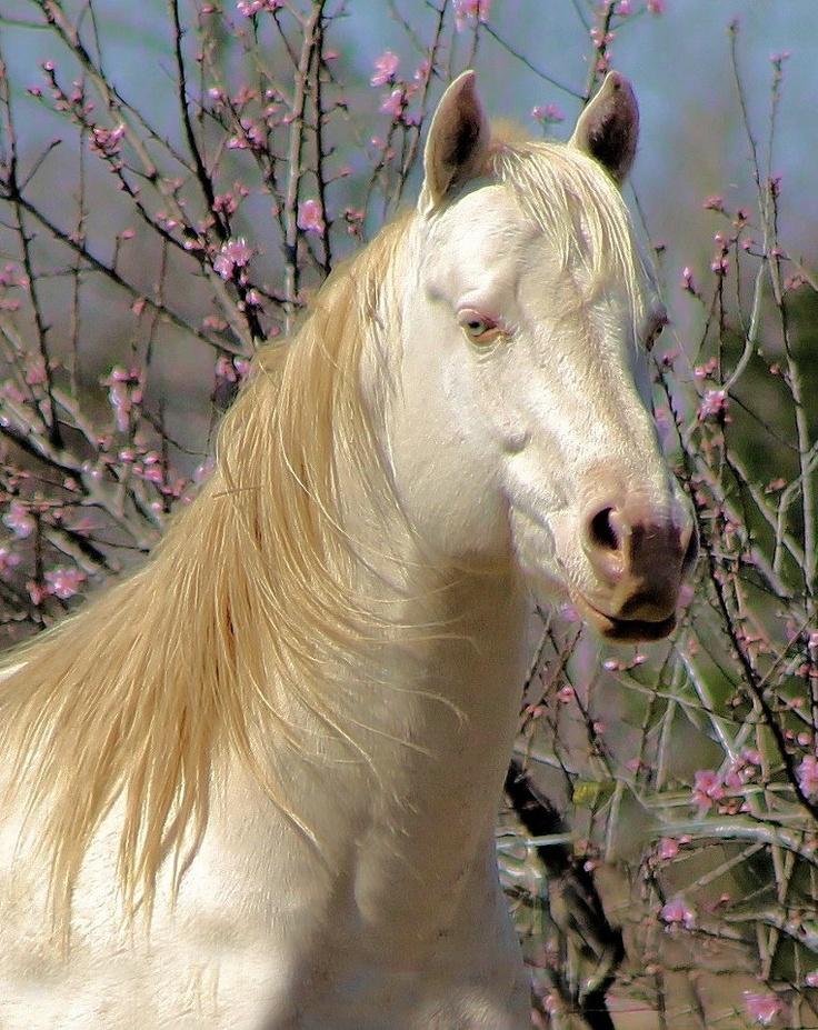 American Quarter Horse...photo by Jane Lassiter Boahn  www.facebook.com/cowboymagic